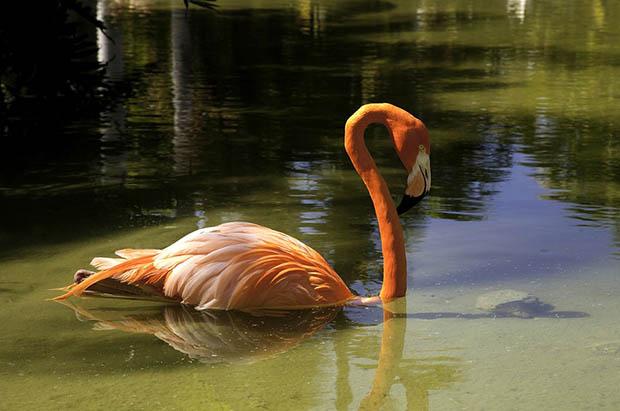 Восхитительные и красивые - картинки природы и животных 9