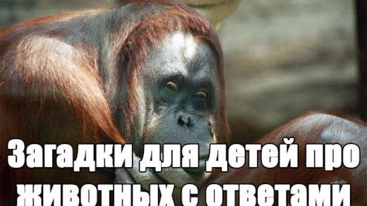 Загадки для детей про животных с ответами - логические, интересные заставка