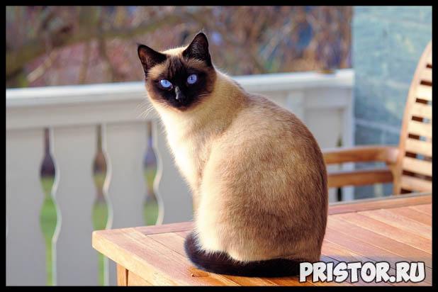 Какую породу кошек выбрать для ребенка - лучшие породы кошек 1