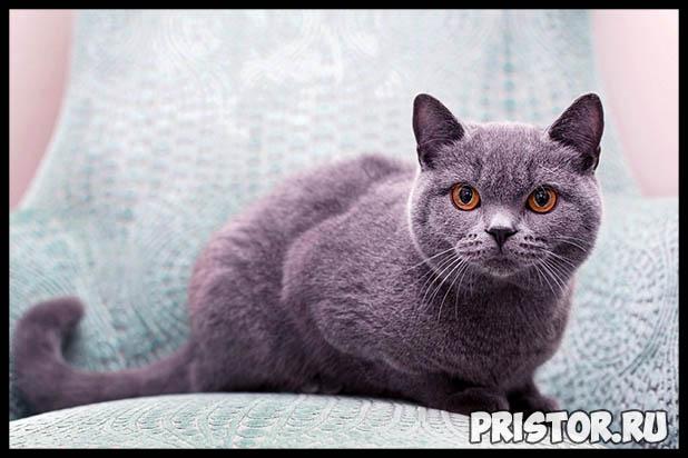Какую породу кошек выбрать для ребенка - лучшие породы кошек 2