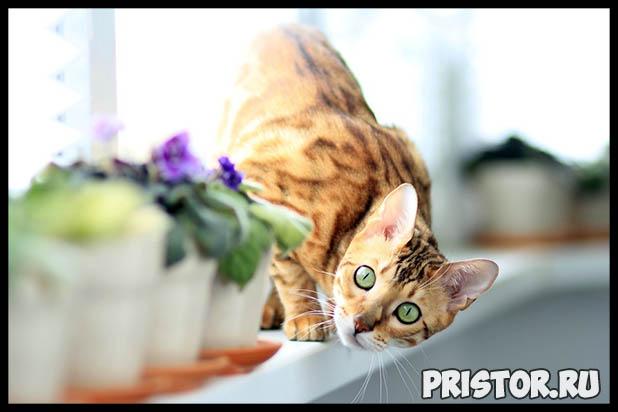 Какую породу кошек выбрать для ребенка - лучшие породы кошек 5
