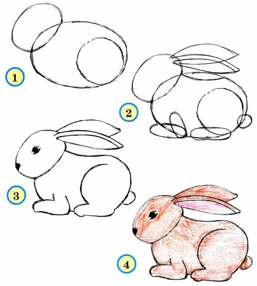 Как рисовать животных поэтапно карандашом для начинающих 1