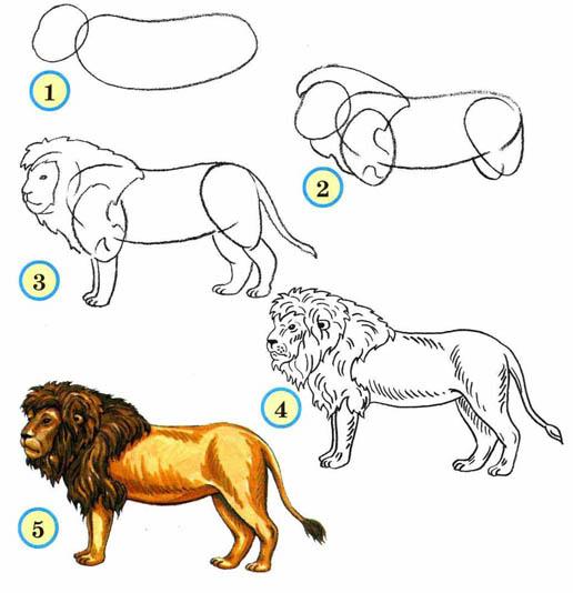 Как рисовать животных поэтапно карандашом для начинающих 5
