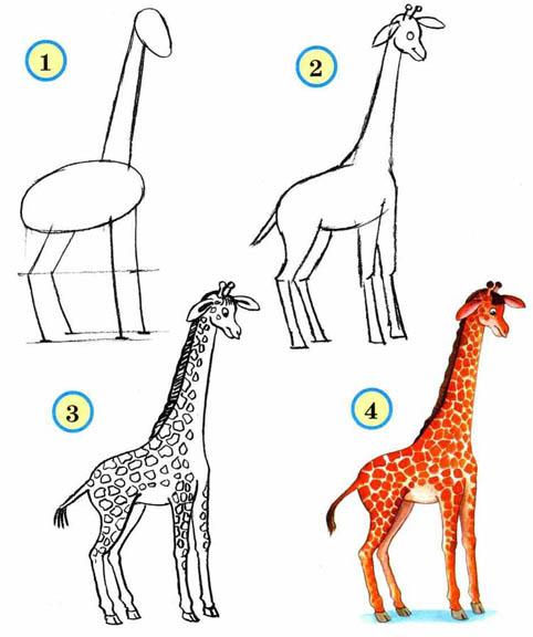 Как рисовать животных поэтапно карандашом для начинающих 6