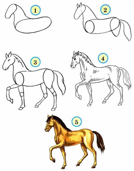 Как рисовать животных поэтапно карандашом для начинающих 9