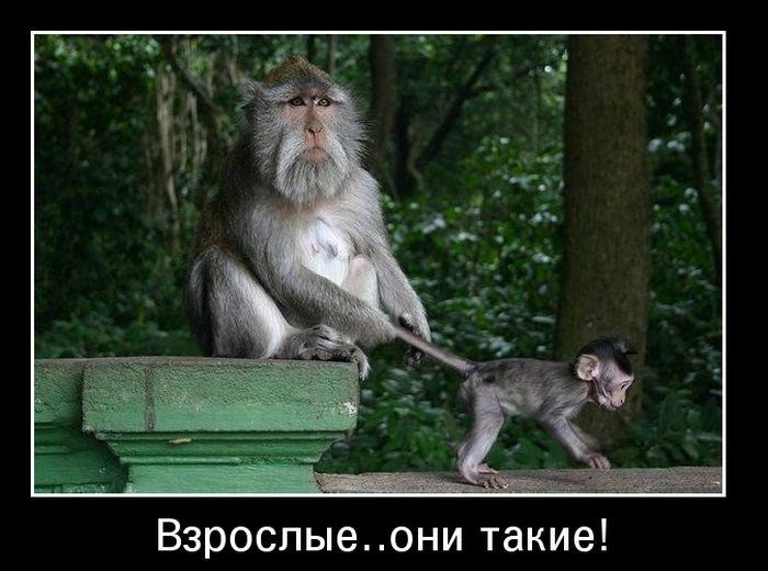 Картинки и фото обезьян - приколы, юмор, смех, с надписями 1
