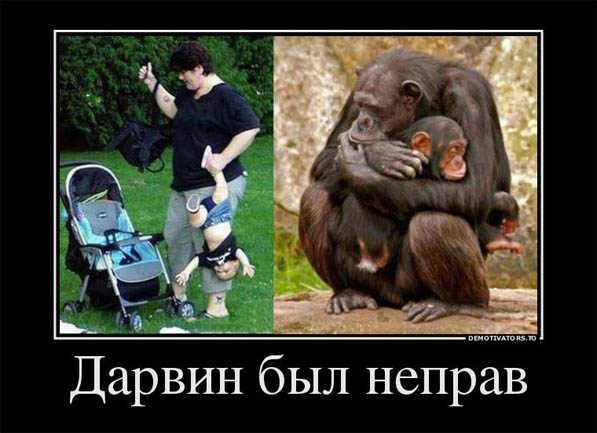 Картинки и фото обезьян - приколы, юмор, смех, с надписями 10