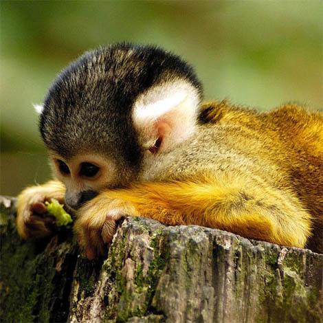 Картинки и фото обезьян - приколы, юмор, смех, с надписями 11