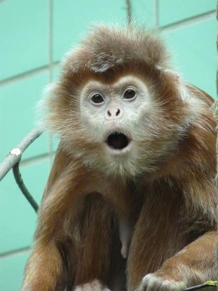 Картинки и фото обезьян - приколы, юмор, смех, с надписями 7