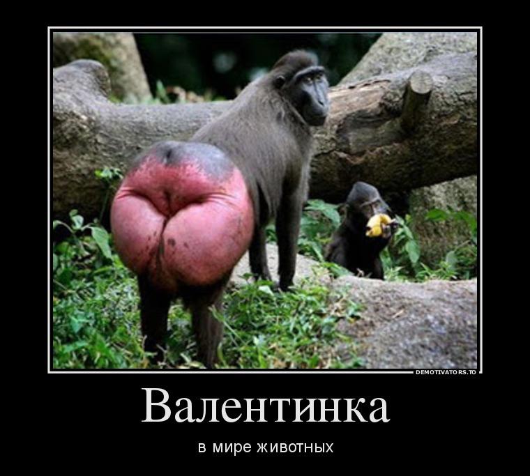 Картинки и фото обезьян - приколы, юмор, смех, с надписями 8