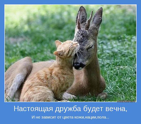 Красивые и прикольные картинки про друзей - смотреть бесплатно 14