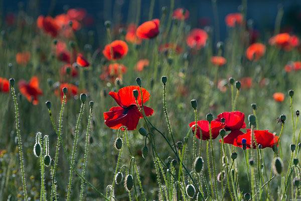 Красивые картинки лета - смотреть бесплатно, скачать онлайн 11
