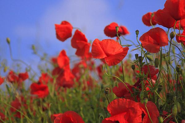 Красивые картинки лета - смотреть бесплатно, скачать онлайн 13