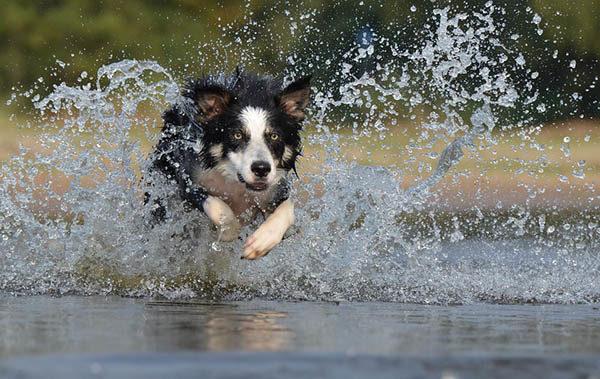 Красивые картинки лета - смотреть бесплатно, скачать онлайн 20
