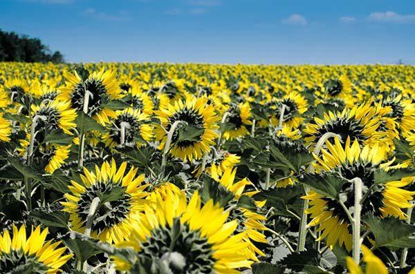 Красивые картинки лета - смотреть бесплатно, скачать онлайн 3