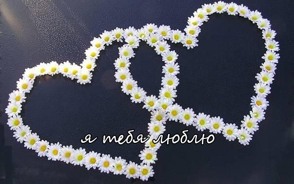 Люблю тебя - картинки, фото, красивые, прикольные, с надписями 12