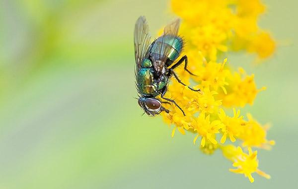 Прикольные и красивые картинки лета, животных - смотреть бесплатно 14