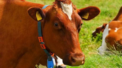 Прикольные и красивые картинки лета, животных - смотреть бесплатно 17