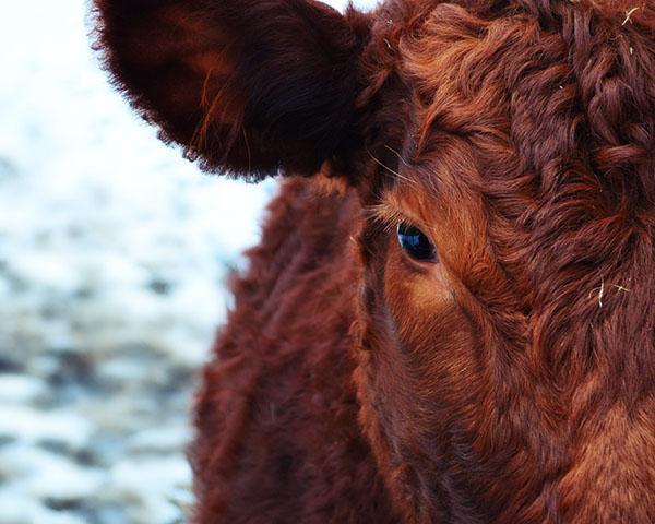 Прикольные и красивые картинки лета, животных - смотреть бесплатно 18