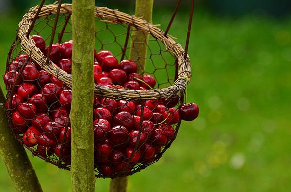 Прикольные и красивые картинки лета, животных - смотреть бесплатно 19