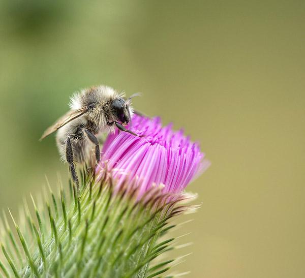 Прикольные и красивые картинки лета, животных - смотреть бесплатно 20