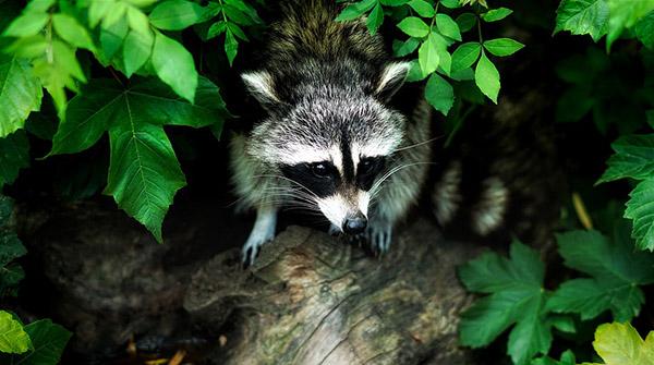 Прикольные и красивые картинки лета, животных - смотреть бесплатно 6