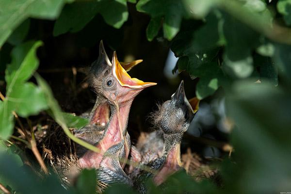 Прикольные и красивые картинки лета, животных - смотреть бесплатно 7