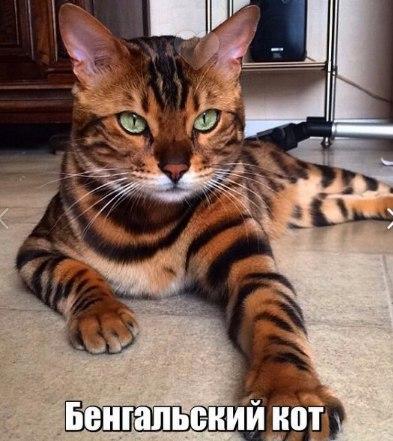 Прикольные и смешные фото животных - смотреть с надписями 11