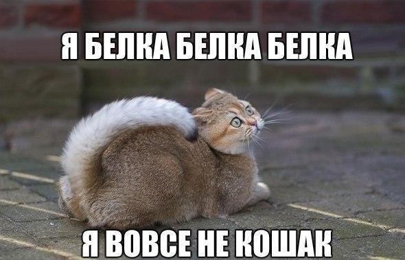 Прикольные и смешные фото животных - смотреть с надписями 14