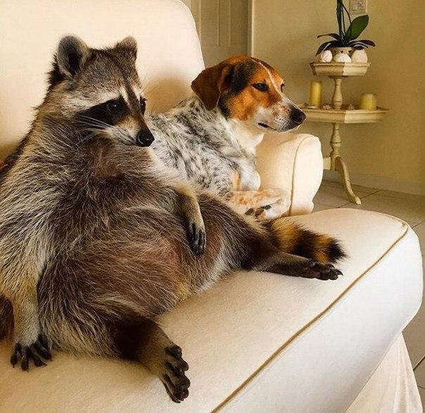 Прикольные и смешные фото животных - смотреть с надписями 7