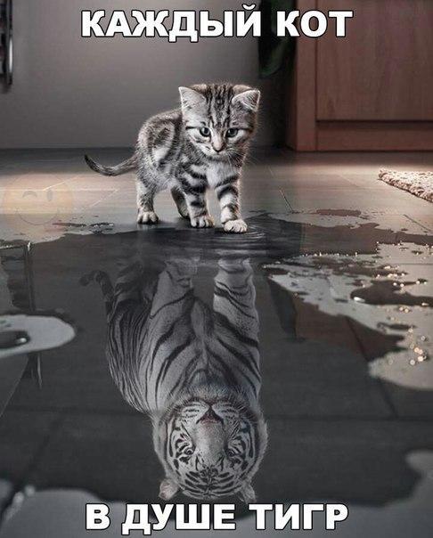 Ржачные и смешные картинки про животных до слез - смотреть онлайн 10