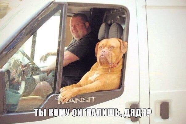 Ржачные и смешные картинки про животных до слез - смотреть онлайн 12