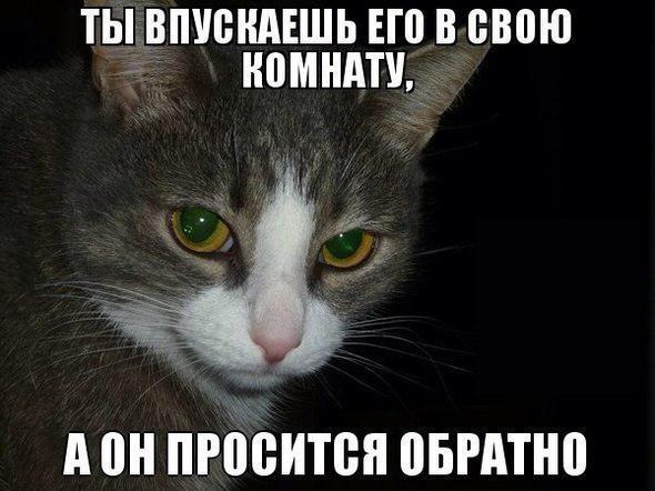 Ржачные и смешные картинки про животных до слез - смотреть онлайн 3
