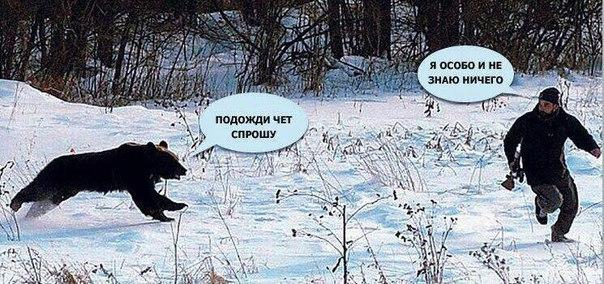Ржачные и смешные картинки про животных до слез - смотреть онлайн 6