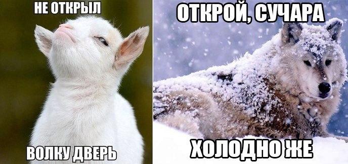 Ржачные и смешные картинки про животных - смотреть онлайн 11