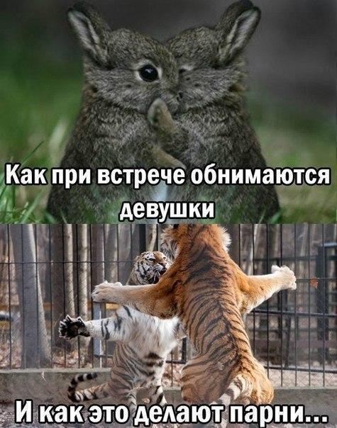 Ржачные и смешные картинки про животных - смотреть онлайн 14