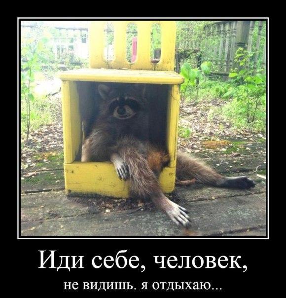 Ржачные и смешные картинки про животных - смотреть онлайн 3