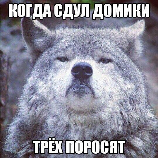 Ржачные и смешные картинки про животных - смотреть онлайн 5