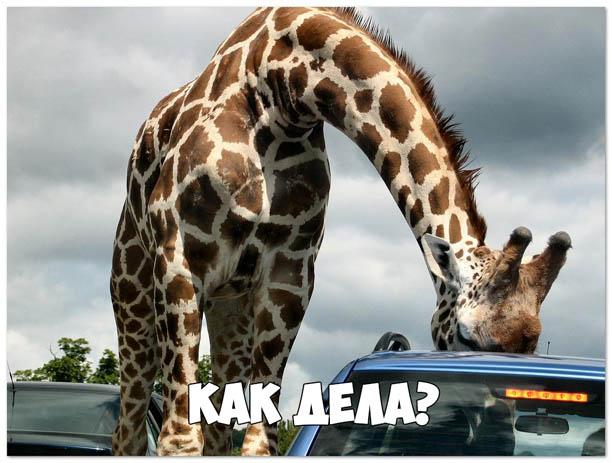 Ржачные и смешные картинки про животных - смотреть онлайн 7