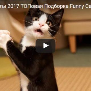 Скачать смешные видео до слез бесплатно - 2017, новые, свежие