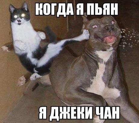 фото смешные фото скачать