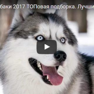 Смешные видео приколы про животных - смотреть, скачать бесплатно