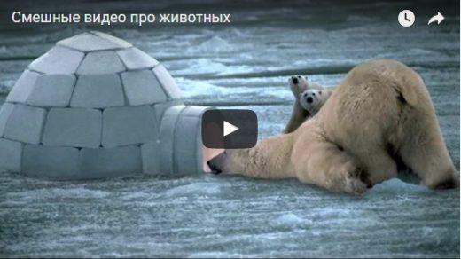 Смешные видео про животных - смотреть бесплатно до слез