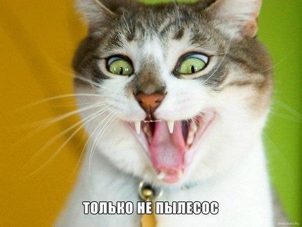 Смешные картинки животных с надписями до слез - смотреть онлайн, 2017 12