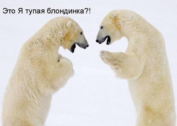 Смешные картинки животных с надписями до слез - смотреть онлайн, 2017 14