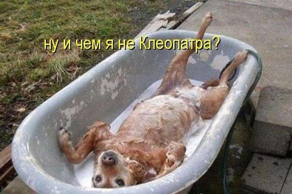 Смешные картинки животных с надписями до слез - смотреть онлайн, 2017 17