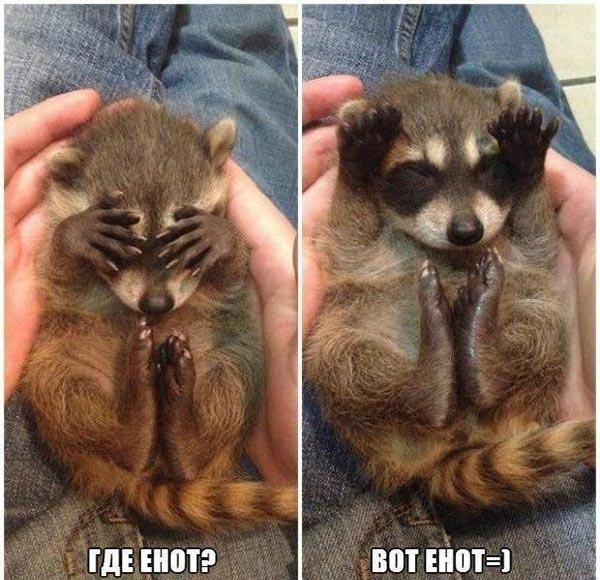 Смешные картинки животных с надписями до слез - смотреть онлайн, 2017 2