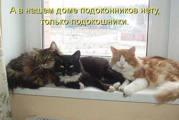 Смешные картинки с надписями до слез для детей с животными 11