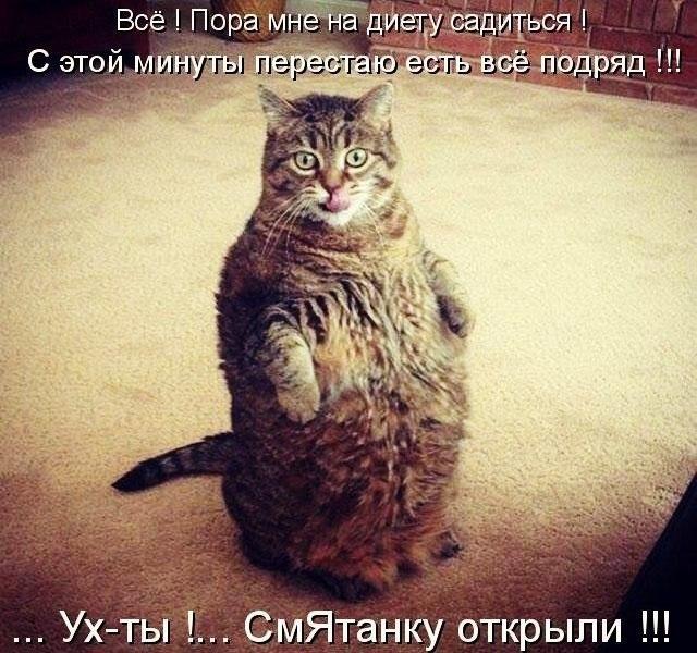 Смешные картинки котов с надписями - смотреть бесплатно 11