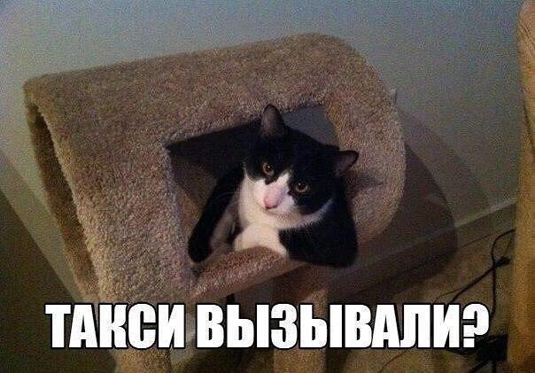 Смешные картинки котов с надписями - смотреть бесплатно 12